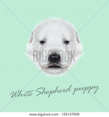 Vector Illustrated Portrait of White Sheperd puppy. Cute white fluffy face of domestic dog on blue background