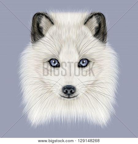 Illustrated Portrait of Arctic fox. Cute white fluffy face of Polar Fox on dark blue background.
