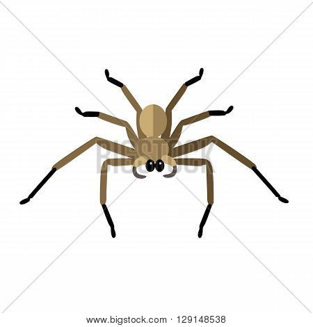 Spider icon logo isolated on white background