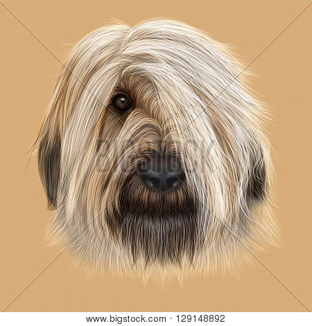 Illustrated Portrait of Briard dog. Cute face of fluffy dog on tan background