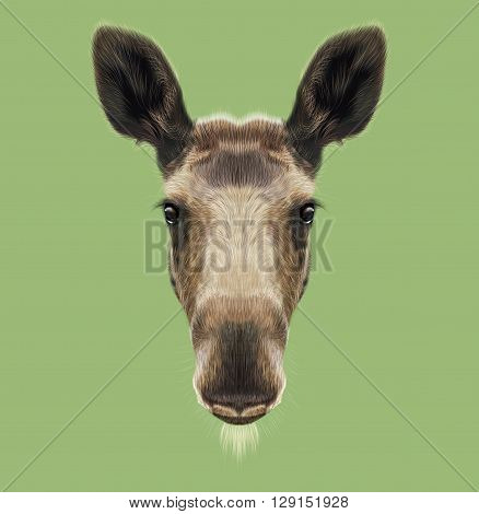 Illustrated Portrait of Moose. Cute face of forest elk on green background.