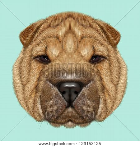 Illustrated Portrait of Shar Pei dog. Cute red wrinkly face of domestic dog on blue background.