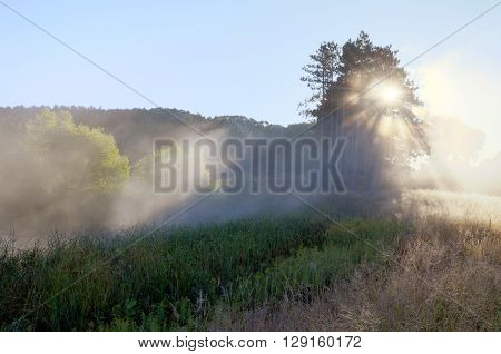 Crepuscular Rays Through the Fog Near the Rice Creek North Regional Trail in Shoreview Minnesota