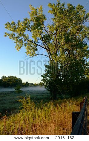 Early Morning Light Bathes a Large Tree with a Foggy Rice Creek in the Distance Arden Hills Minnesota
