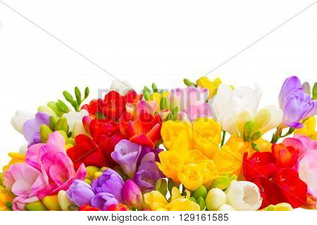 Fresh freesia flowers posy border close up isolated on white background