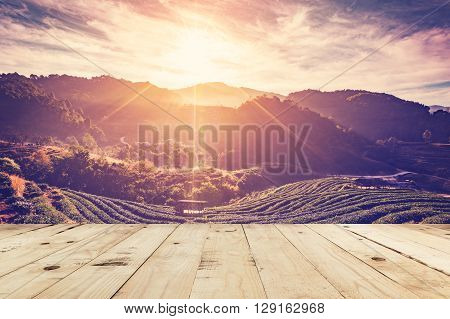 Tea Field And Sunrise Vintage In Morning