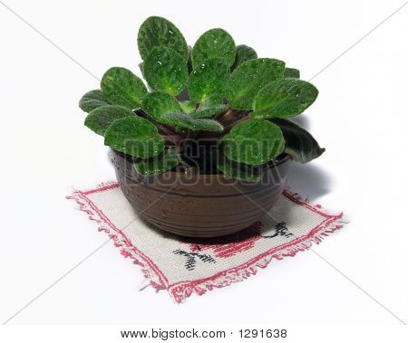 Home Plant Isolated