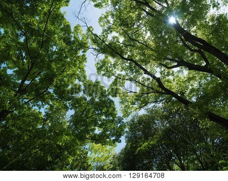 Gleam of sunshine coming through a dense forest canopy.