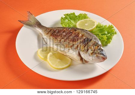 Dish with grilled fish gilthead bream portion