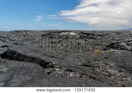 Lava Field On Big Island Of Hawaii