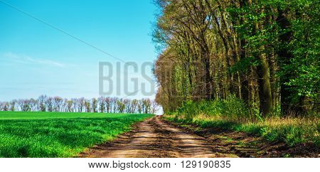 dirt road near woodland planting and colorful green fields in spring