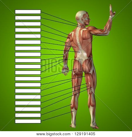 3D illustration of a concept or conceptual male or human anatomy, a man with muscles and textbox on green gradient background