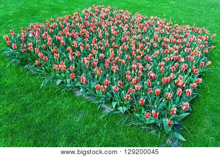 Lisse Netherlands - April 23 2016: colorful flowers at Keukenhof. It is one of the worlds largest flower gardens. Approximately 7 million flower bulbs are planted annually in the park