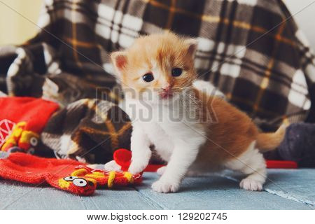 Kitten and mittens. Red orange newborn kitten in a plaid blanket. Sweet adorable tiny kitten on a serenity blue wood background play with mitten. Funny kitten crawling and meowing