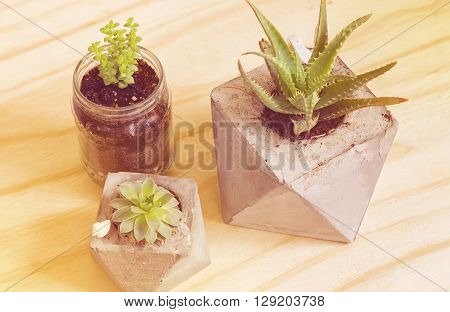 Succulent plants with vintage filtre in yellow tones