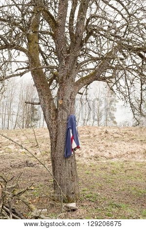 dirty  sweater hanging on a tree, early spring time