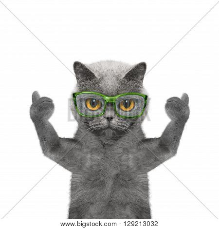 cat in glasses has very poor eyesight -- isolated on white