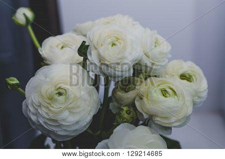 Beautiful bouquet of buttercup ranunculus flowers on white grey background. Still life rustic style dark tones. Modern beauty stylization.