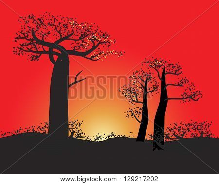 Tranquil silhouette of baobabs on a sunset sky scene in nature of Madagascar