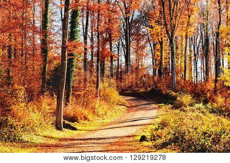 Pathway through the autumn forest on a nice sunny day