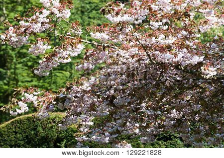 Shady spot under the branch of a tree with blossom
