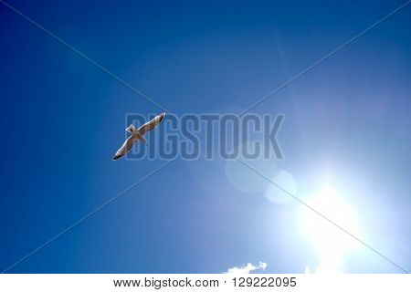 Peugeot flying in front of the sun