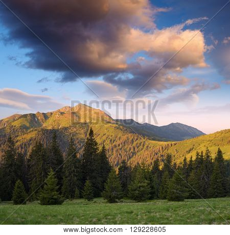 Mountain landscape. Sunny morning. Fir forest. Carpathians, Ukraine, Europe