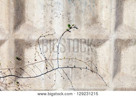 Tree struggling to grow on a concrete wall