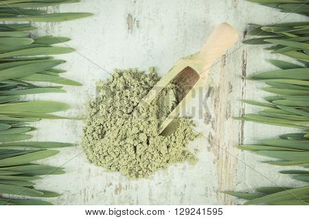 Vintage photo Barley grass and heap of young powder barley with wooden scoop healthy nutrition and lifestyle body detox