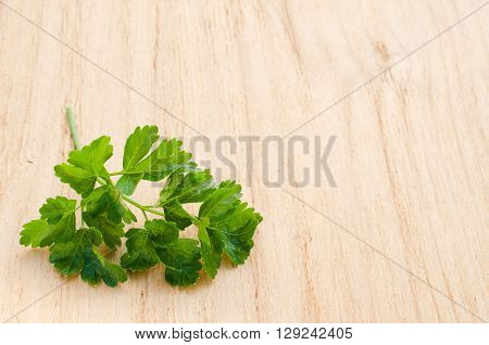 Sprig of fresh organic green parsley on a wooden background, selective focus, rustic style.
