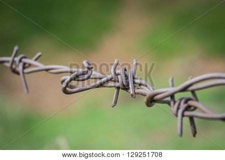 Tangled Web Of Barbed Wire