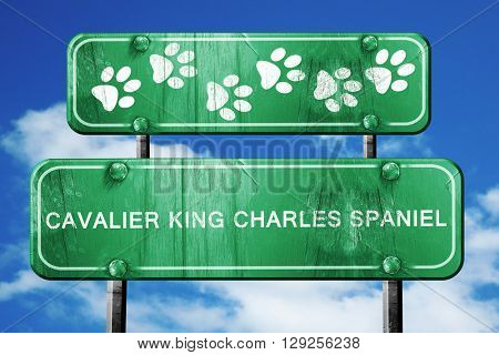 Cavalier king charles spaniel, 3D rendering, rough green sign wi