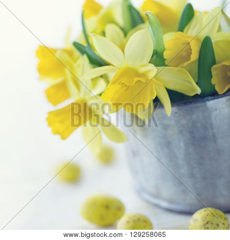 Bouquet of yellow spring daffodils for easter