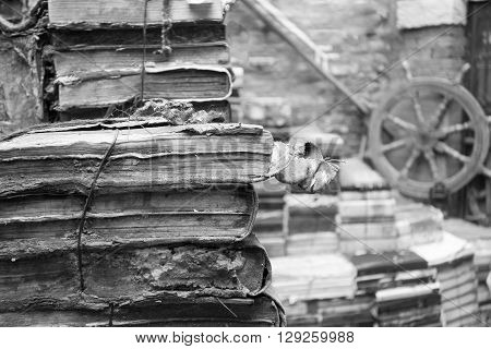 a lot of the old torn and shabby books closeup and an indistinct background of monochrome tone
