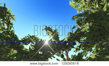 Green juicy crone tropical tree with incredible branches . tropical forest in Indonesia.