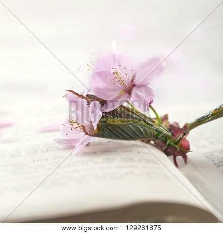 Cherry tree flowers on a page of an old book with vintage hazy editing