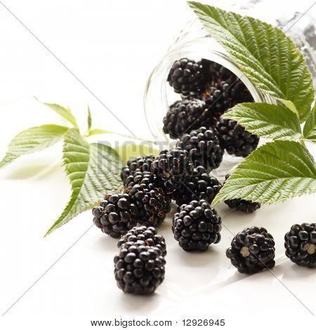 dewberries (blackberries) and green leaves