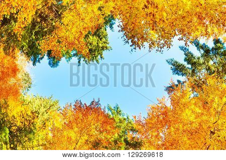 Fall In The Forest With Orange Trees