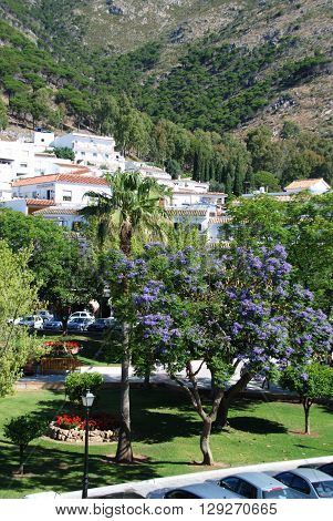 MIJAS, SPAIN - JUNE 14, 2008 - Jacaranda trees in the Plaza Virgen de la Pena Mijas Malaga Province Andalucia Spain Western Europe, June 14, 2008.