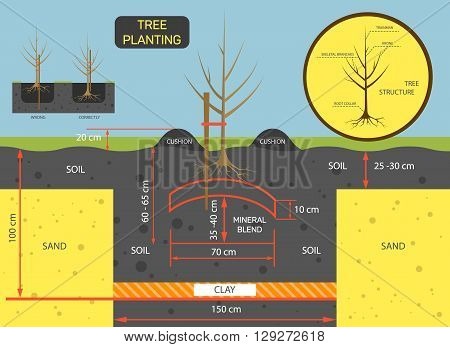 Planting tree concept vector illustration. Prepare soil for planting tree.