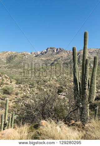 View of the desert surrounding Tucson, Arizona