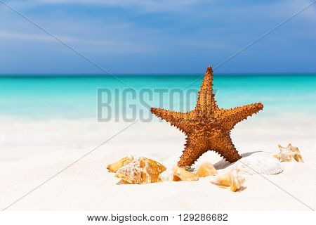 Starfish On The White Sandy Beach