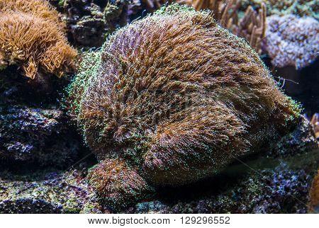 Tropical corals in a large saltwater aquarium