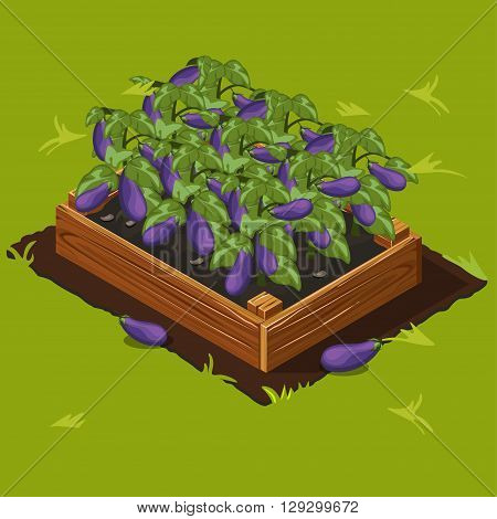 Vegetable Garden Wooden Box with Eggplant. Set 5