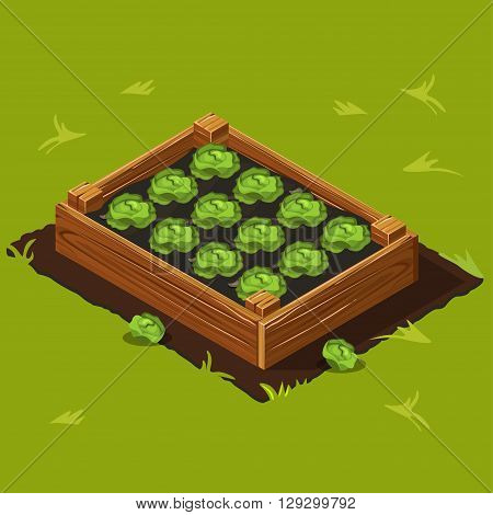 Vegetable Garden Wooden Box with Cabbage. Set 9