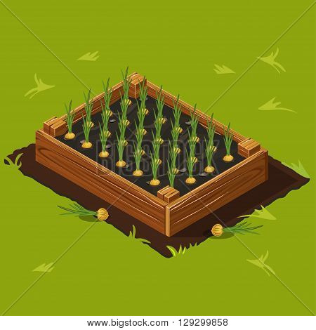 Vegetable Garden Wooden Box with Onions Set 11