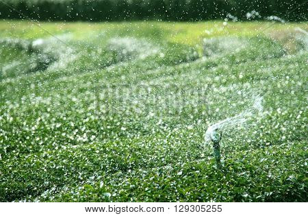 Water irrigation system of green tea field