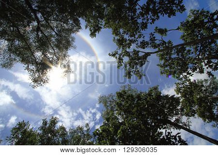 Silhouette of big trees with sun corona on blue sky