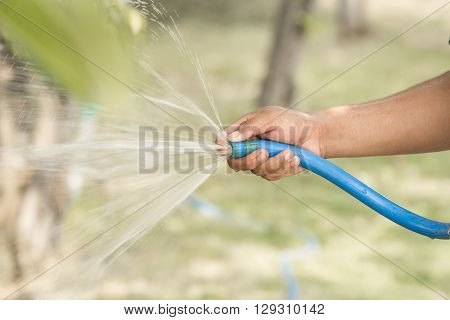 The gardener was watering the plants in the garden. Using hands squeeze the blue water pipe water to water the plants.