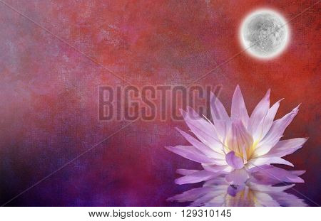 Lotus Blossom Textured Background 3D Render